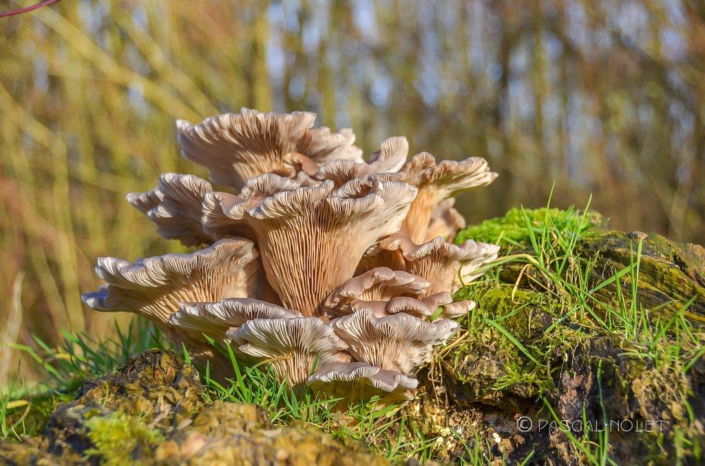 Mushroom / Fungus